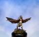 Busard Corvus #1